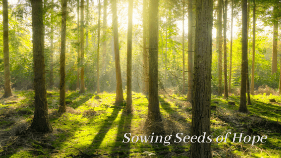 Sowing Seeds of Hope: Why Do Bad Things Happen?
